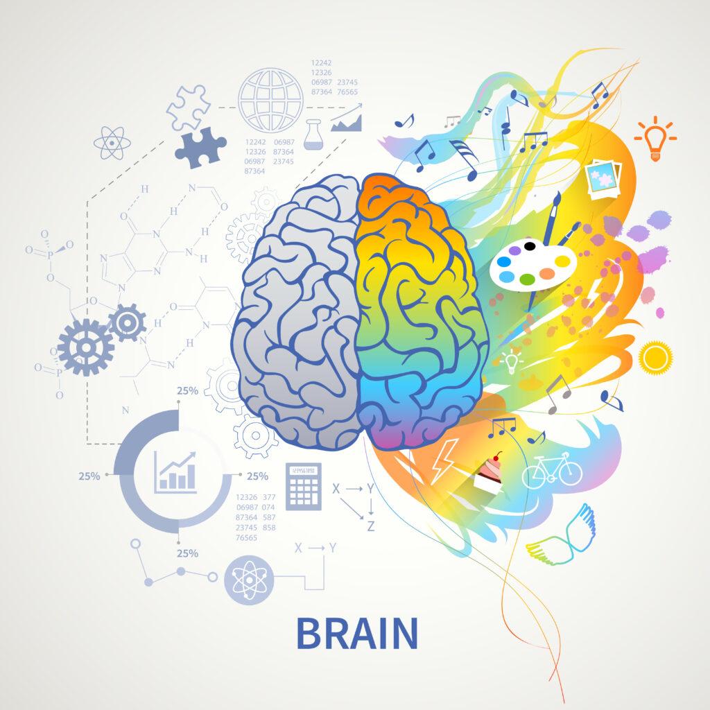 immagine cervello dicotomia sinistro-destro